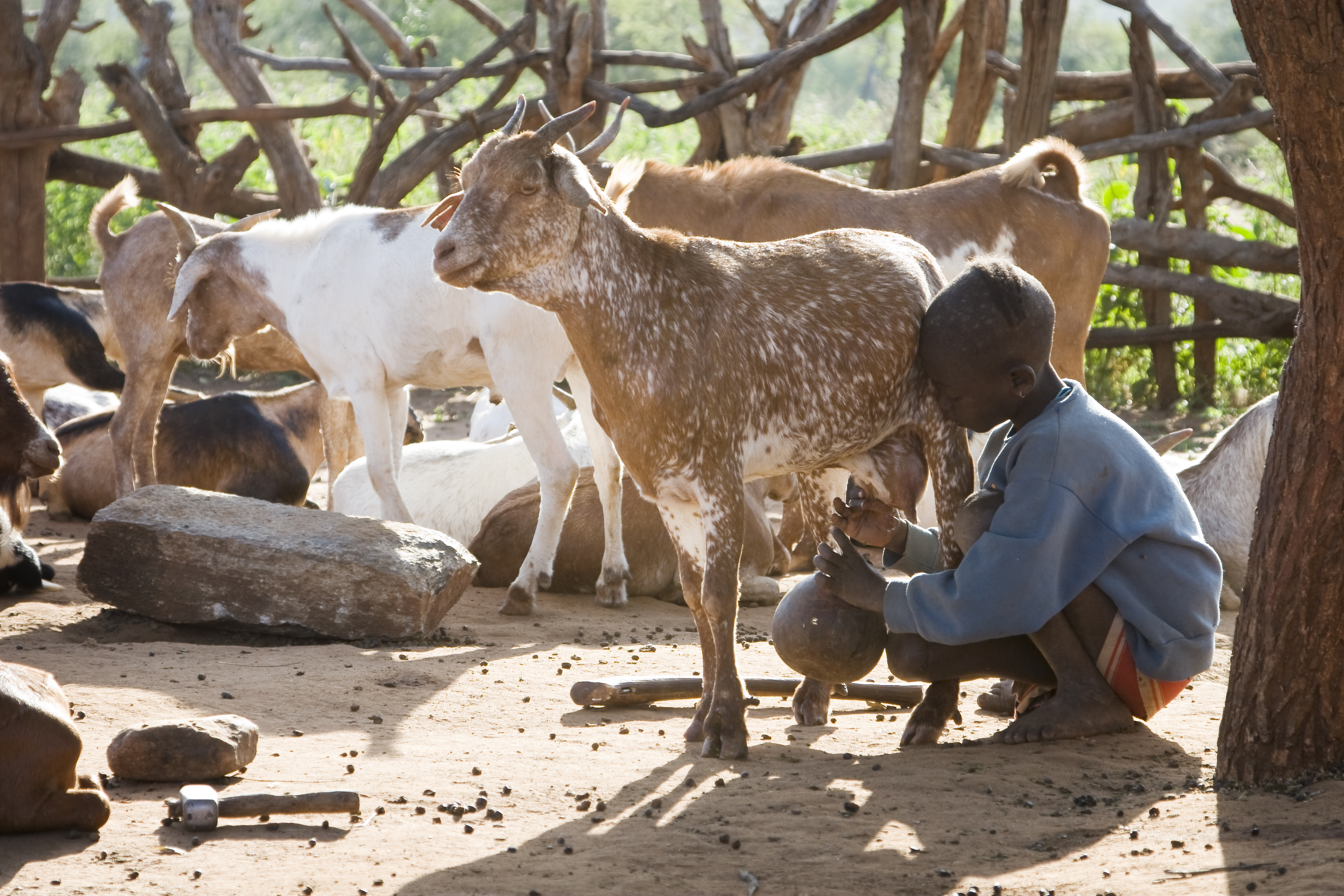 legs-webinar-livestock-and-nutrition-in-emergencies-nov-2020